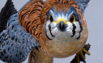 American_Kestrel_wood_headshot.jpg